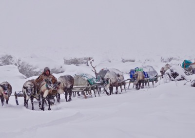 Nomadic Nenets reindeer herders from the Kanin Peninsula migrating along the bank of the River Mezen in a blizzard